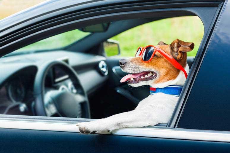 normativa trasporto cani in auto