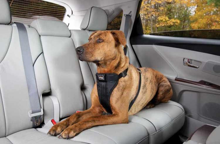 viaggiare in auto con il cane in sicurezza